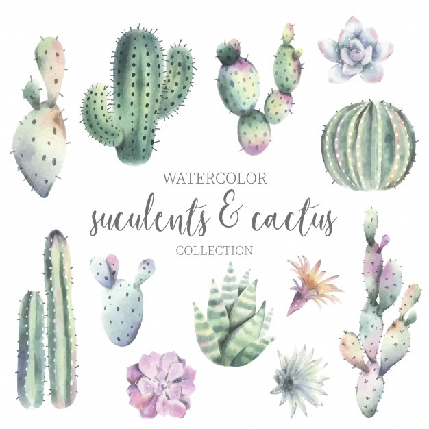 626x626 Cactus Vectors, Photos And Psd Files Free Download