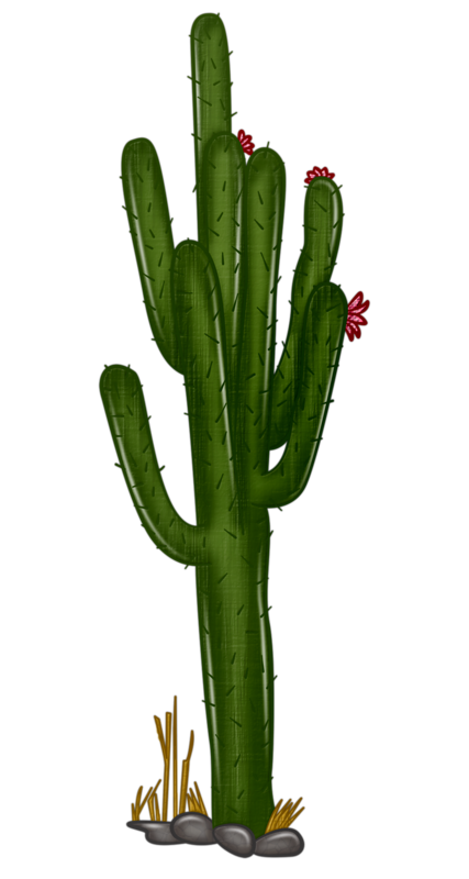 427x800 Collection Of Free Cactus Vector Realistic. Download On Ubisafe
