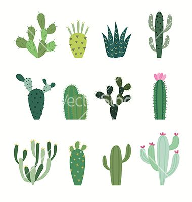 380x400 Cactus Collection In Vector Doodles Cacti