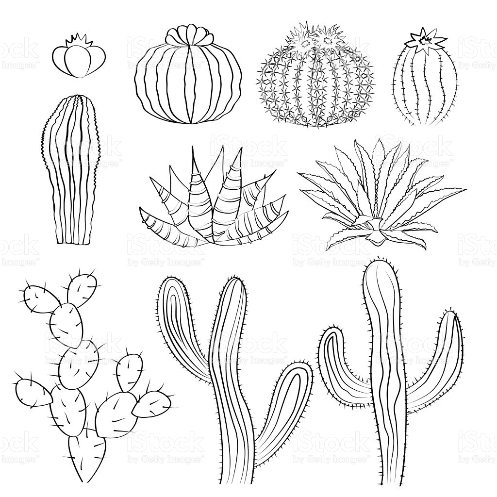 1024x1024 Drawn Cactus Free Collection Download And Share Drawn Cactus