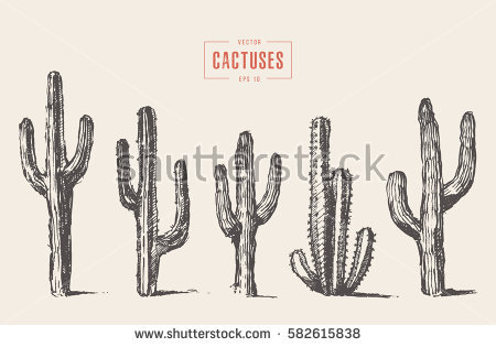 450x315 Collection Of Cactus Texture Drawing High Quality, Free