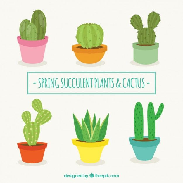 626x626 Cactus Vector Free Download Flat Design Cactus Collection Free