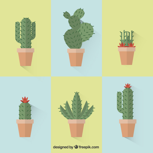626x626 Collection Of Cactus Vector Free Download