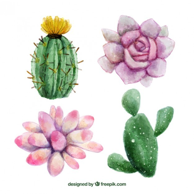 626x626 Ai] Watercolor Hand Painted Flowers And Cactus Vector Free