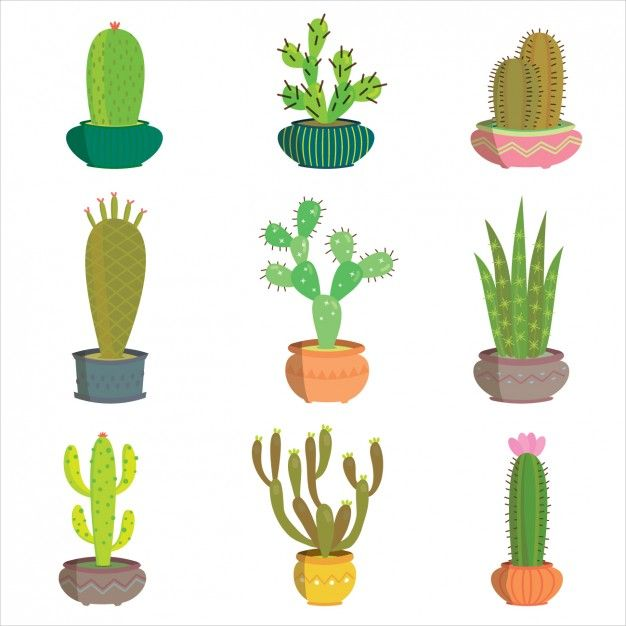 626x626 Coloured Cactus Collection Vector Free Download Flowers