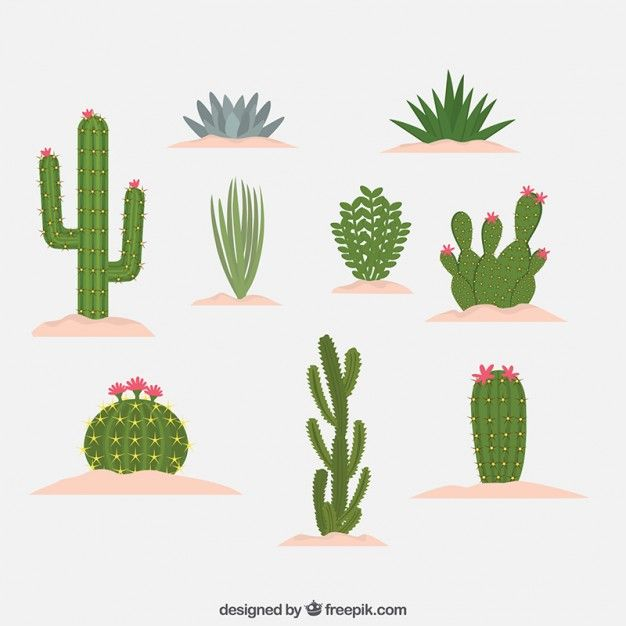 626x626 Differents Kind Of Cactus Design Free Vector Painting Ideas