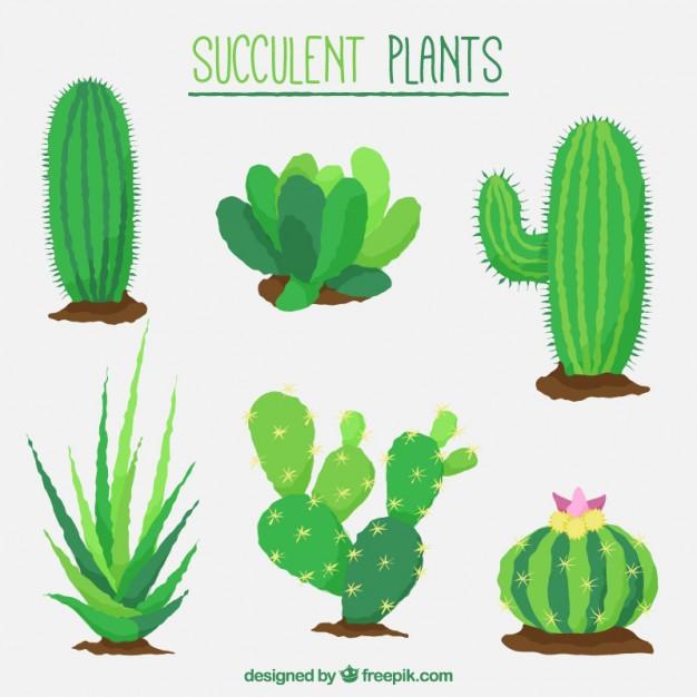 626x626 Drawn Cactus Flat Design