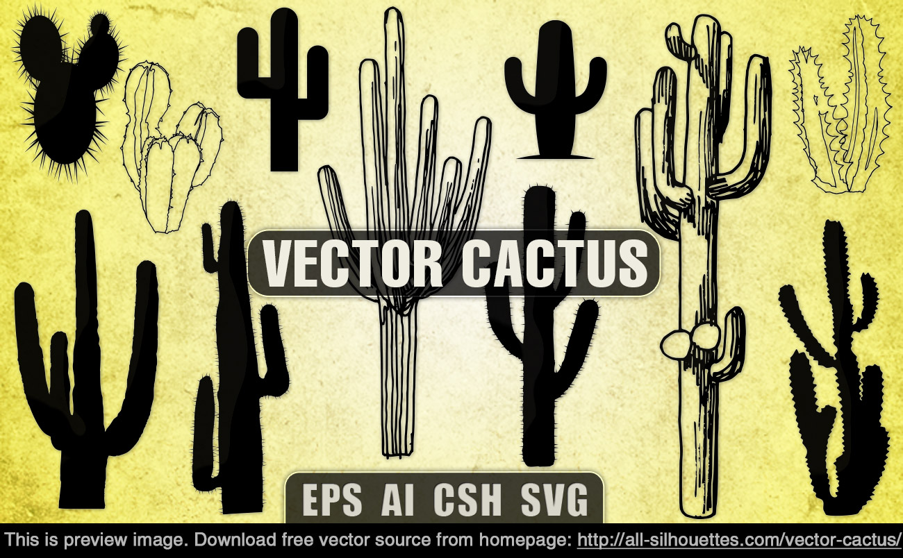 1300x804 Cactus Images Free Image Group