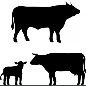 300x300 Glamorous Free Vector Cow Silhouette Vector Lazttweet