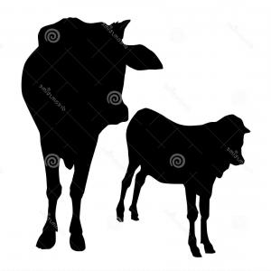 300x300 Stock Illustration Cow Calf Vector Illustration Image Arenawp