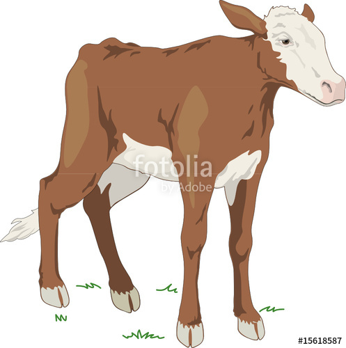 497x500 Calf, Vector Illustration Stock Image And Royalty Free Vector