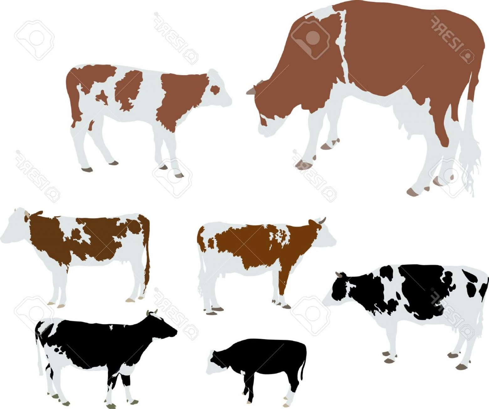 1560x1306 Calf And Cow Silhouette Vector Arenawp