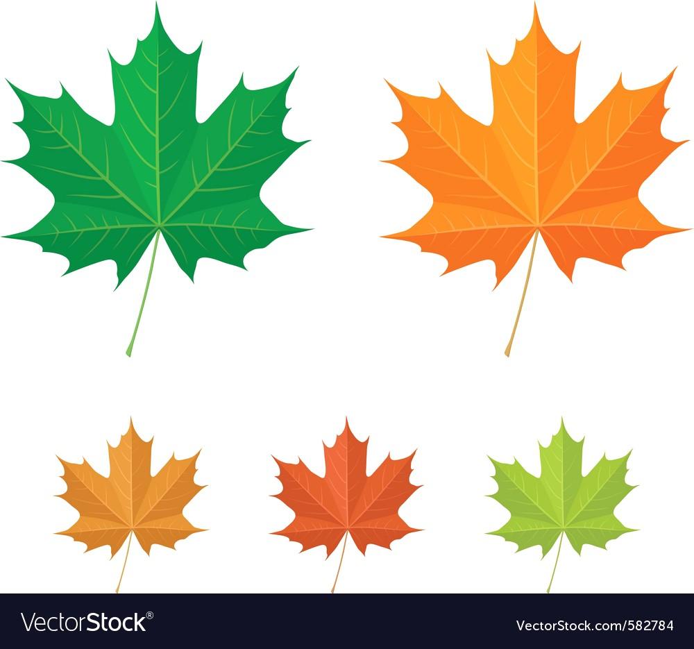 1000x935 Maple Leaf Images