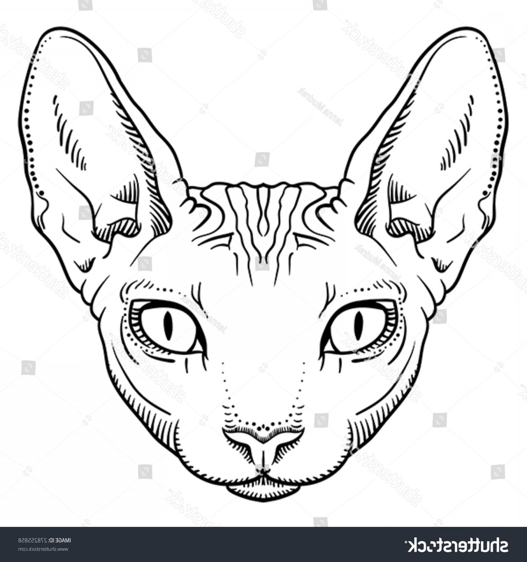 1800x1920 Just Arrived Outline Of Cat Face Vector Black Drawing With Paws