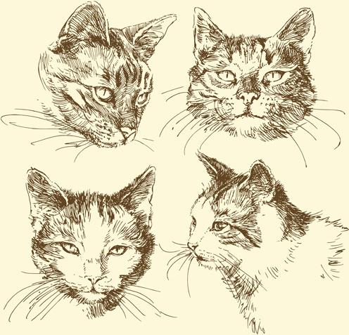496x477 Hand Drawn Cat Head Vector Free Vector In Encapsulated Postscript