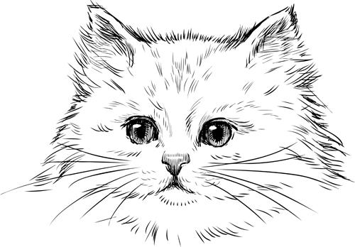 500x348 Hand Drawn Cats Head Vector Set 02 Free Download