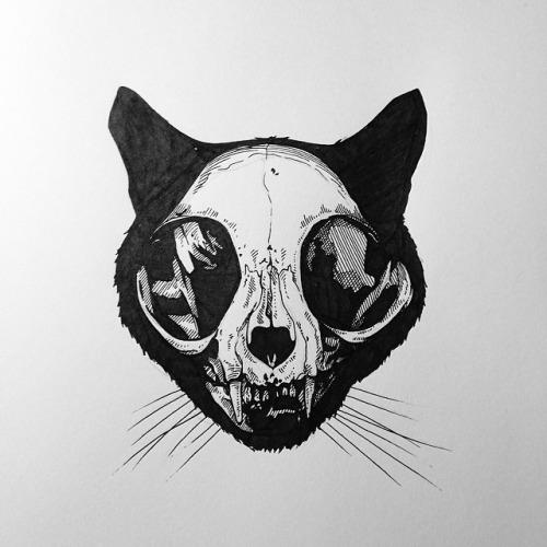 Cat Skull Vector