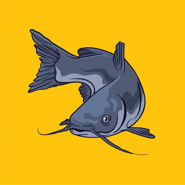 626x626 Catfish Illustration Vectors, Photos And Psd Files Free Download