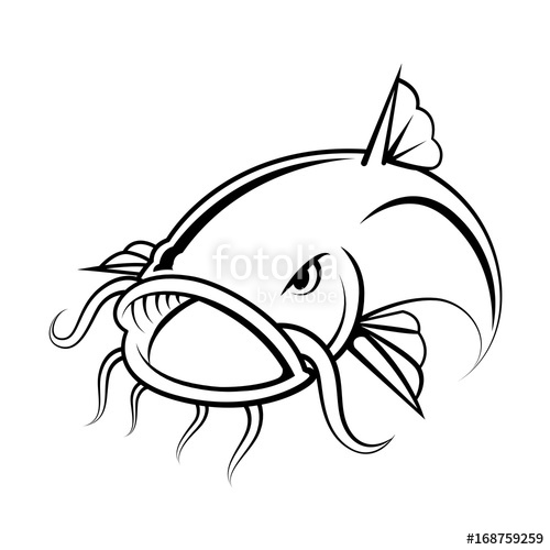500x500 Graphic Catfish On White Background, Vector Stock Image And