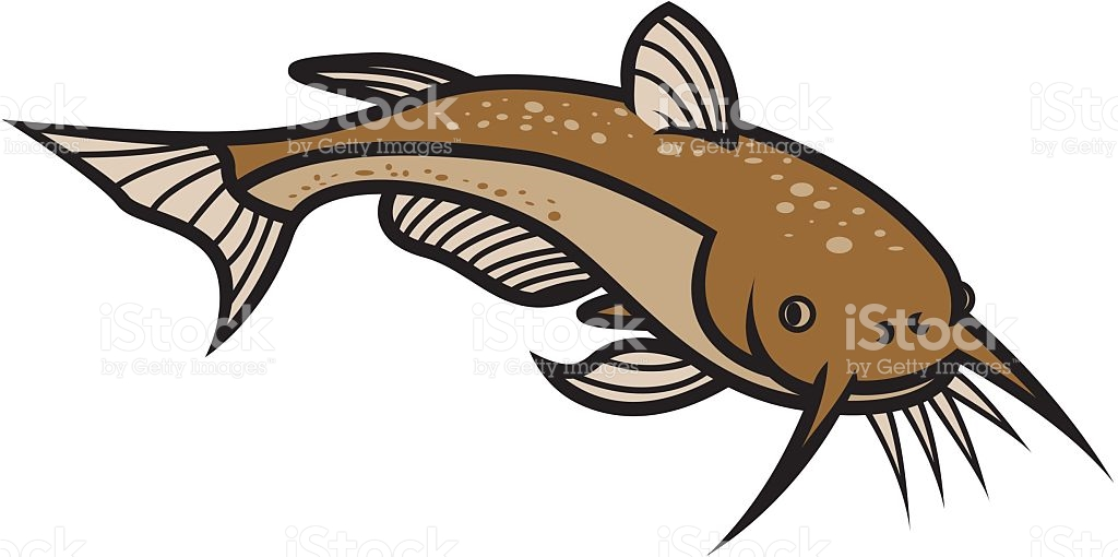 1024x510 Collection Of Catfish Clipart High Quality, Free Cliparts