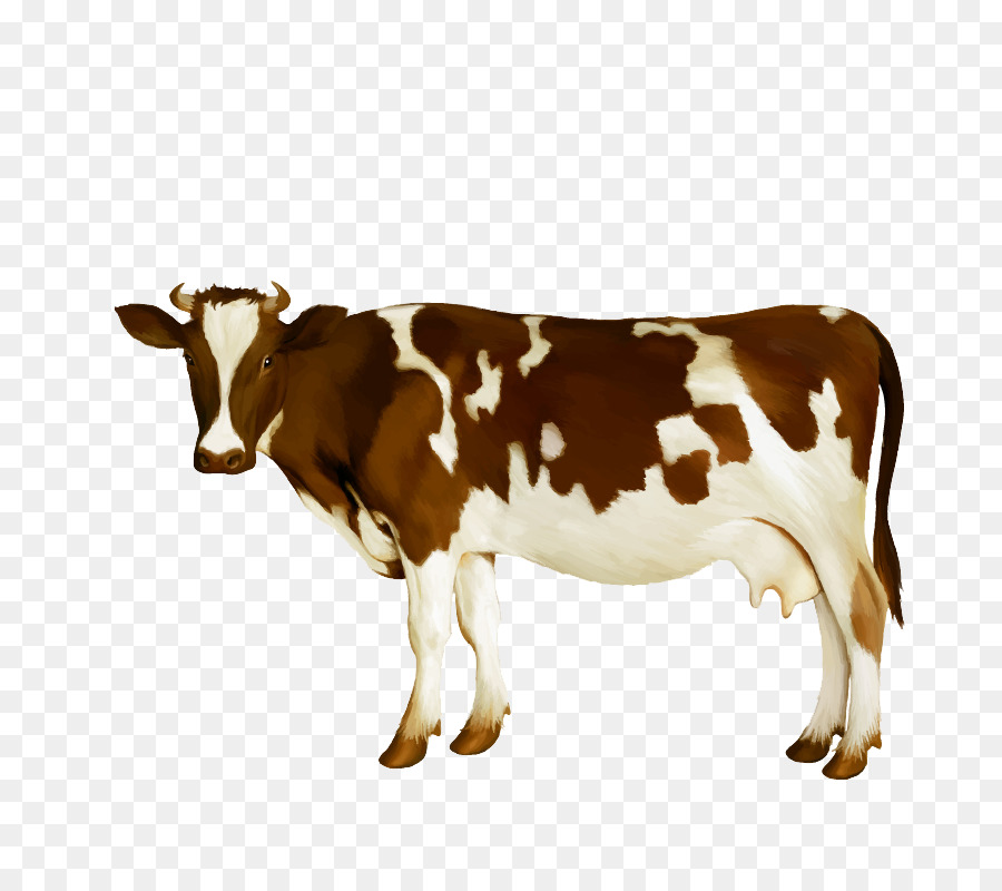 900x800 Dairy Cattle Milk Calf