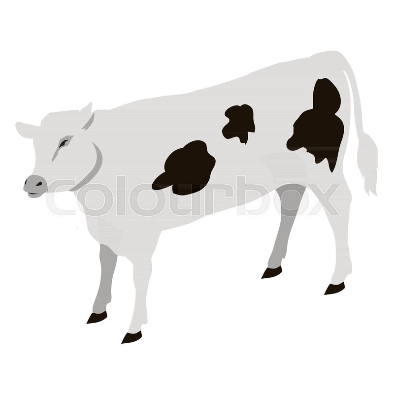 800x800 Calf Young Of Domestic Cattle Vector Illustration. Calves Are