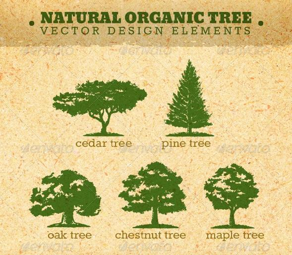 Cedar Tree Vector