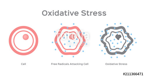 500x267 Oxidative Stress Cell Vector Free Radical Stock Image And