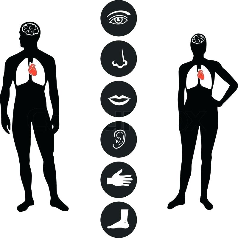 799x800 Dead Body Clip Art Icons Of Various Human Body Human Male And