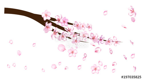 500x281 Realistic Cherry Branch Illustration Vector. Blooming Sakura