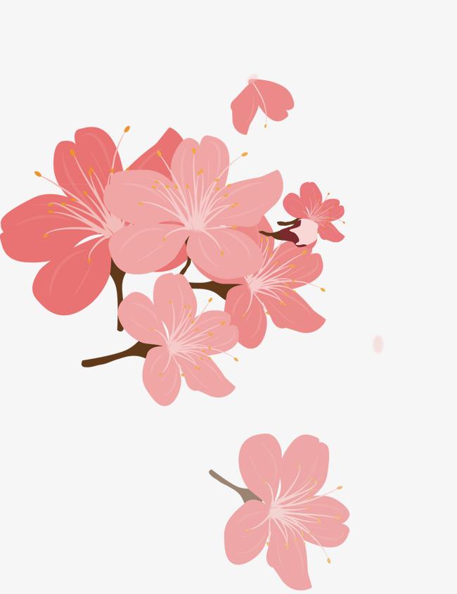 650x844 Cherry Petals, Cherry Vector, Vector Petals, Cherry Blossoms Png