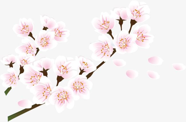 650x427 Cherry Petals, Vector Petals, Cherry Blossoms Png And Vector For