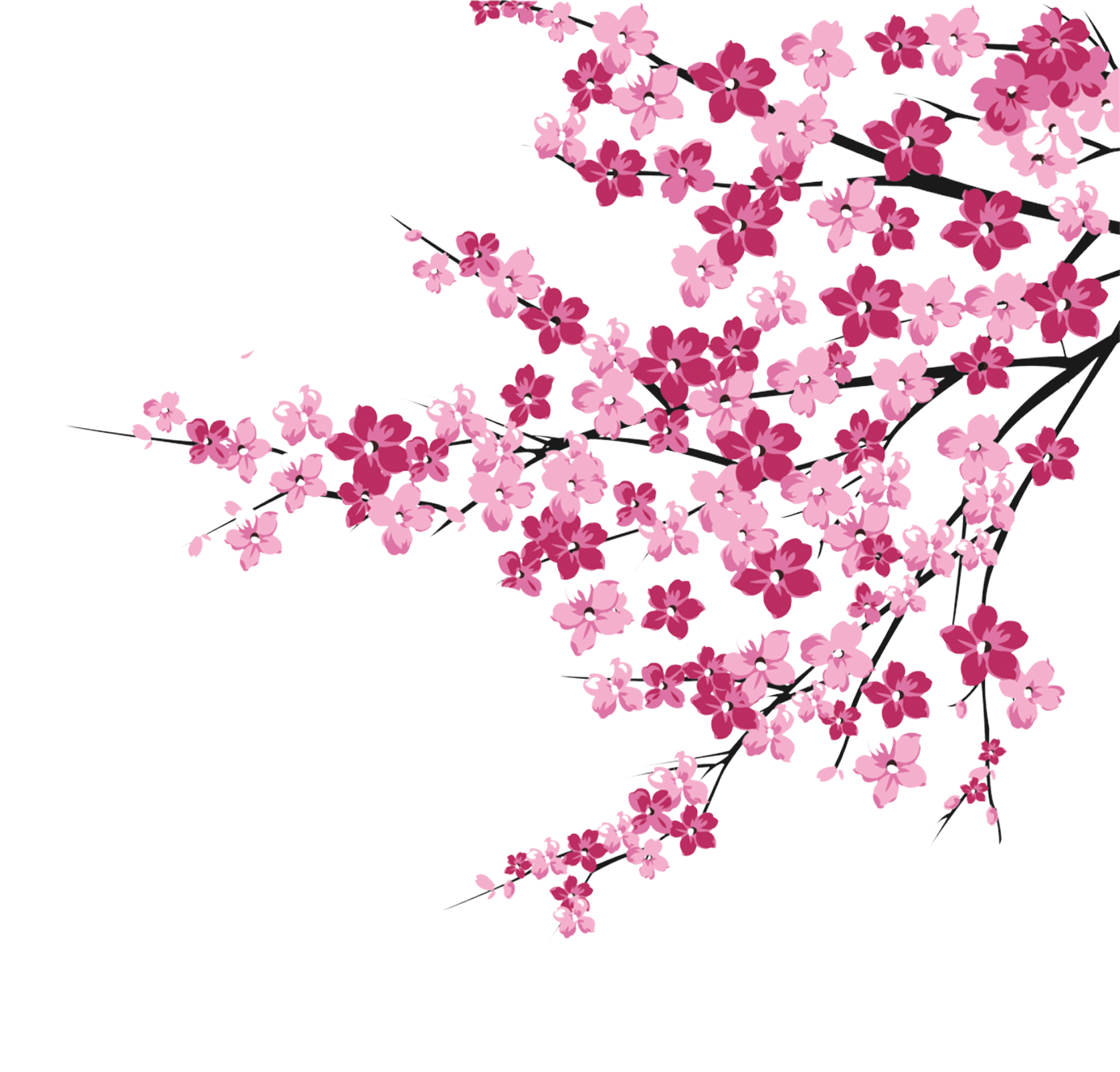 Cherry Blossom Petals Vector at GetDrawings | Free download
