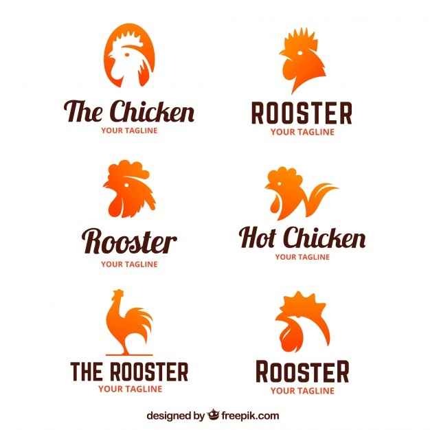 626x626 Chicken Vectors, Photos And Psd Files Free Download