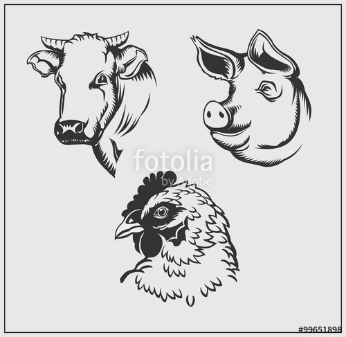 500x487 Heads Of Farm Animals. Cow, Pig And Chicken. Vector Monochrome