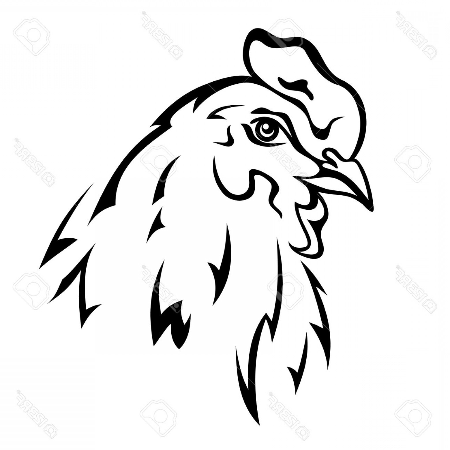 1560x1560 Photochicken Head Vector Illustration Black And White Outline