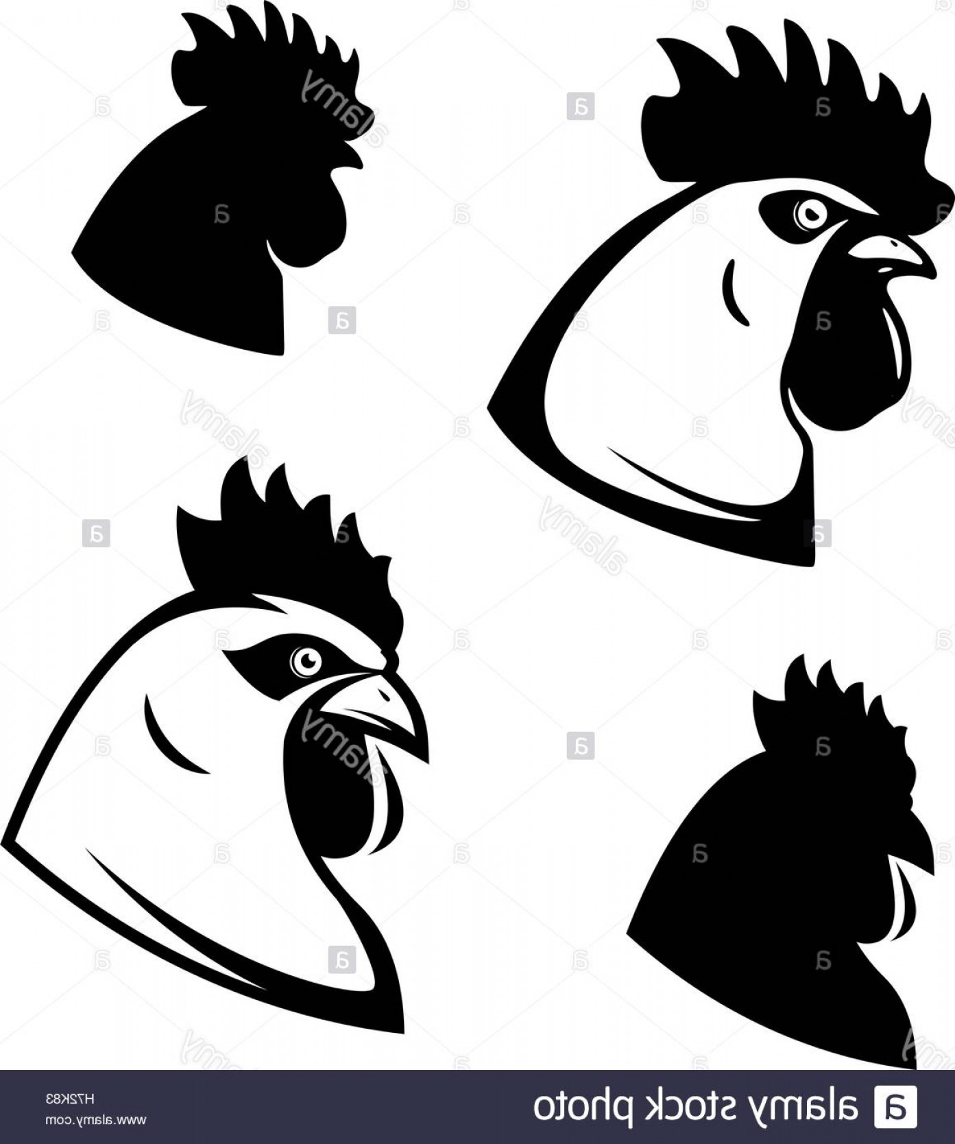 1393x1668 Stock Photo Set Of Chicken Heads Rooster Head Design Elements For