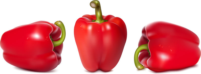 800x295 Fine Chili Peppers Vector
