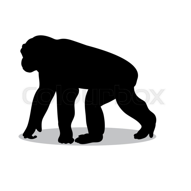 800x800 Chimpanzee Monkey Primate Black Silhouette Animal. Vector