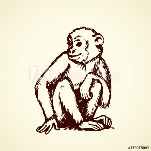 500x500 Chimpanzee. Vector Illustration
