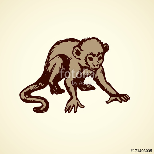 500x500 Chimpanzee. Vector Illustration Stock Image And Royalty Free