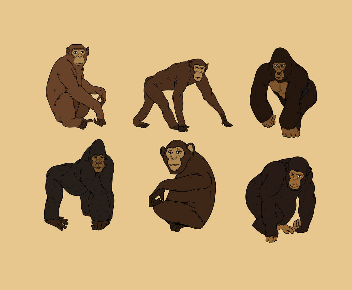 1136x936 Gorilla And Chimp Vector Vector Art Amp Graphics