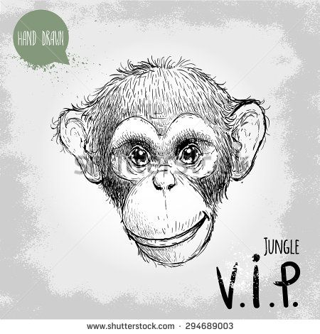 450x470 Hand Drawn Sketch Style Illustration Of Monkey Face. Jungle Vip