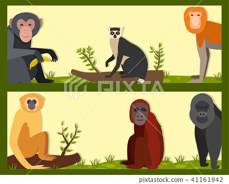 450x363 Monkey Character Animal Different Breads Wild Zoo Ape Chimpanzee