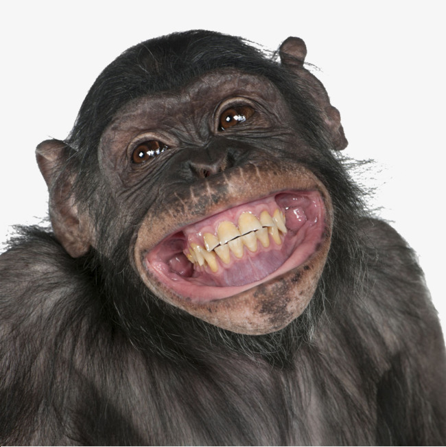 650x651 Chimpanzee Png, Vectors, Psd, And Clipart For Free Download Pngtree