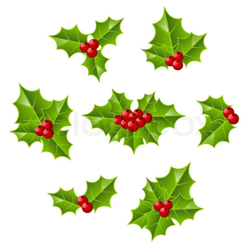800x800 Set Of Christmas Holly Leaves Stock Vector Colourbox