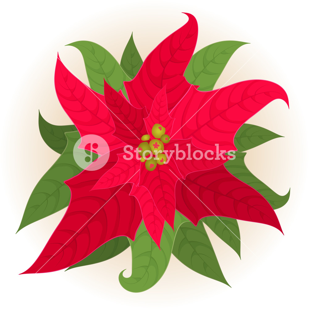 1000x1000 Christmas Star. Vector. Royalty Free Stock Image