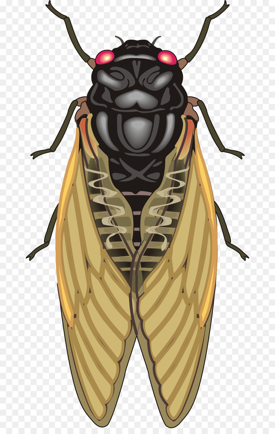 900x1420 Insect Cicadas Clip Art