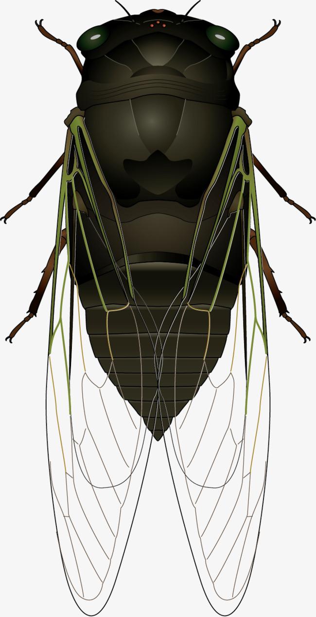 650x1268 Black Cicada Vector Material, Black Vector, Black Cicada, Vector