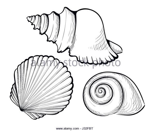 624x540 Drawn Shell Clam Shell